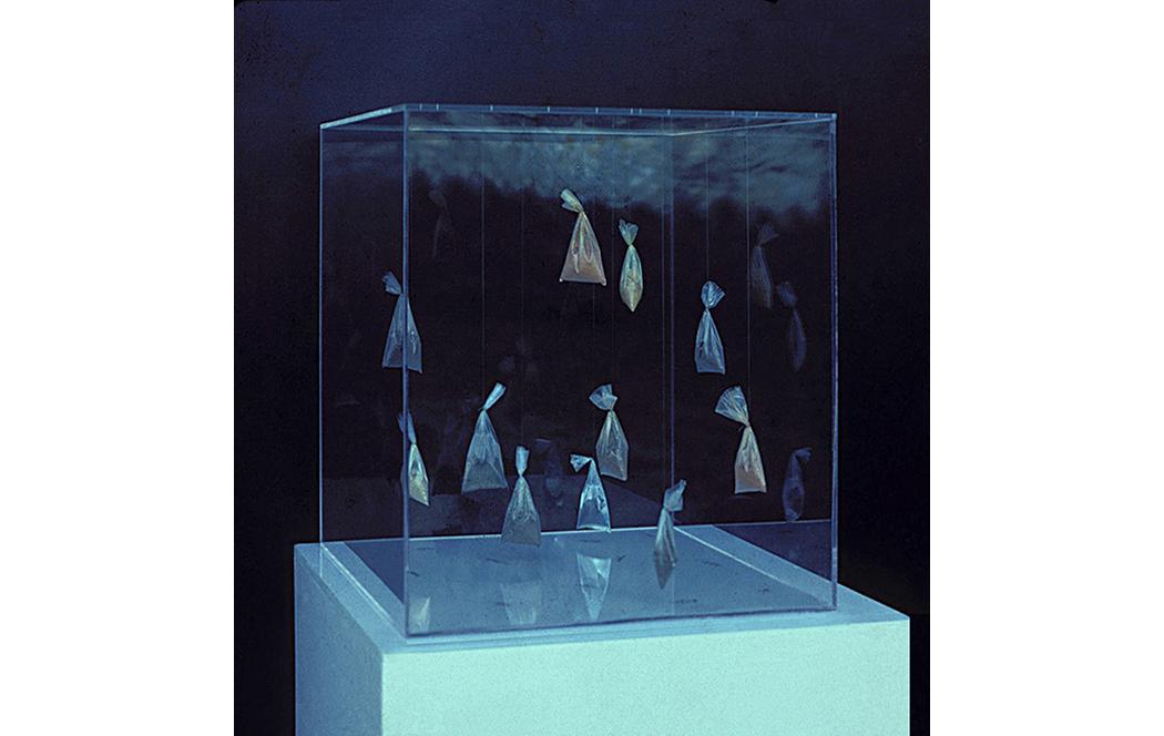TERRA NOSA, 1983, Jorge Barbi